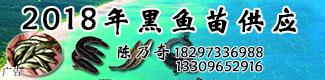 2018年黑鱼苗供应