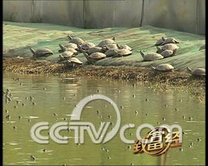 中国水产养殖网_打印文章