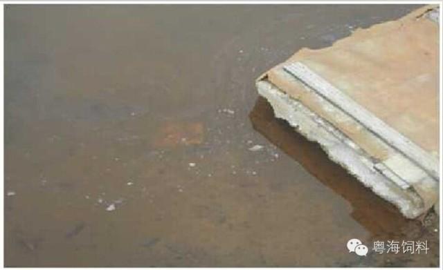 三、铁锈水危害: 1、鱼虾慢性中毒,体质减弱,生长缓慢: 在养殖前期,可能看不到明显症状,养殖到后期,慢性中毒症状逐渐体现。特别是南美白对虾长到6公分,长不大,发病率极高。 2、水难肥。 3、PH值偏低。 四、铁锈水处理方案: (以下为1米水位推荐用量) 方案1:有机酸解毒灵1-2亩/瓶。
