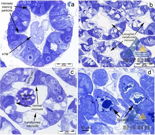 胰腺微细结构手绘图