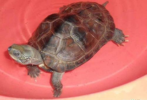 以龟为个体生命系统的结构层次