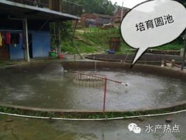 鳜鱼繁殖季节_鳜鱼在水库可以繁殖吗_鳜鱼一年繁殖几次