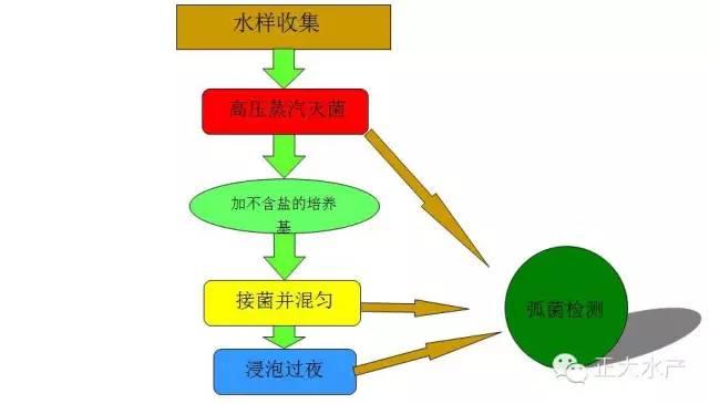 实验步骤流程图