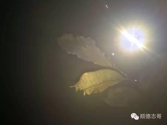 怎么防止大龟咬小龟_大龟咬小龟怎么办_公龟为什么咬母龟