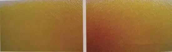 四、淡绿色(左图)、翠绿色(右图) 这种水色的水质看上去嫩爽,透明度在20-35厘米之间,肥度适中,水中的藻类是绿藻,常见的绿藻有小球藻、海藻、衣藻等。绿藻能吸收水中大量的氮肥,净化水质,养殖动物在此环境中生长快,体色透明。通常这种水色出现在养虾初期,也就是放苗后的一个月内,这时候塘中有机质含量不高,所以能保证这种水色。但说实话,以土池养殖模式来说,想一直控制这种水色,也是很难的。因为过了一个月后,虾苗吃料逐渐加多,导致水中的有机质开始越来越多,水色一不留神就会过肥了。真想控制这种水色的话。需要经常排水
