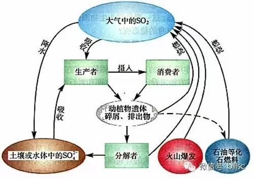 微生物在自然界物质循环中的作用