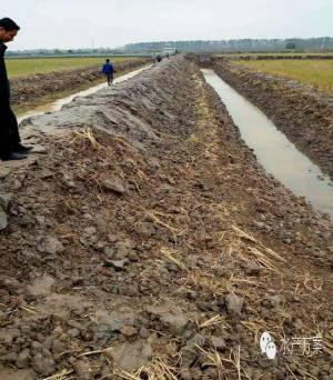 小龙虾养殖池塘到底该怎么建?(干货)
