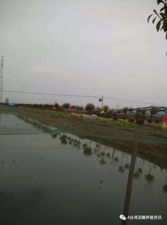防鸟网设计.-台湾泥鳅养殖池塘的建设要点