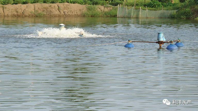 大家都知道養魚先養水,養水先養泥,底泥是影響水質的關鍵因素。新塘底泥好,養殖動物不容易發病,養殖多年的池塘,塘底淤泥深,是有害菌和寄生蟲卵的聚集區,更是耗氧的重災區。越黑越臭的底泥含氮量越高,這樣的池塘開春后水越容易變黑或老綠,如果大量底泥上翻還會造成水變導致氨氮、亞硝酸鹽升高引起養殖動物發病。因此我們該如何提高池塘底泥利用率,減少底泥帶來的危害呢?