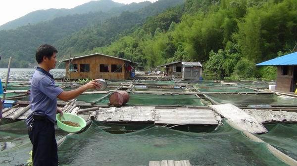 养鱼用什么药预防_鱼缸养鱼用什么药_养鱼一般都用些什么药