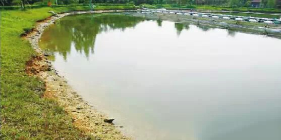 鱼塘养殖中期怎么肥水+