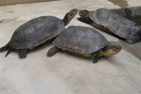 南石金钱龟是金钱龟吗_金钱龟互相咬_石金钱龟咬颈怎么办