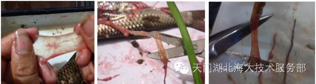鱼的种类_鱼什么什么什么_红尾鱼