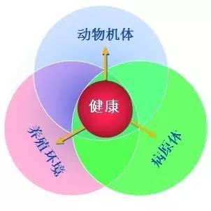 属于纽曼保健系统模式的是_纽曼的保健系统模式认为_保健模式