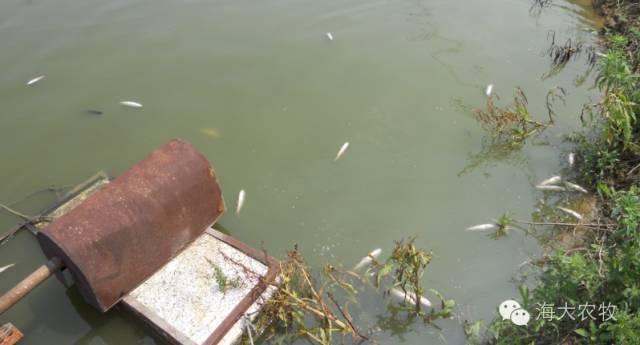 鱼塘有鱼消毒用什么最好_鱼塘有鱼怎样消毒最好_鱼塘杀虫用什么