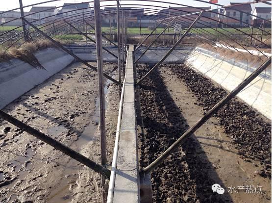 江苏如东小棚虾养殖户如何调控藻相?