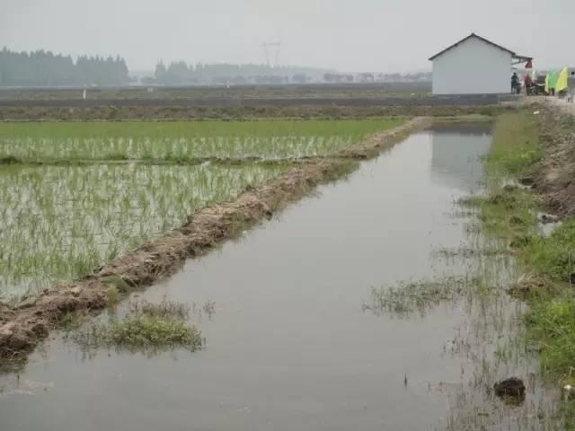 小龙虾稻田养殖如何把握