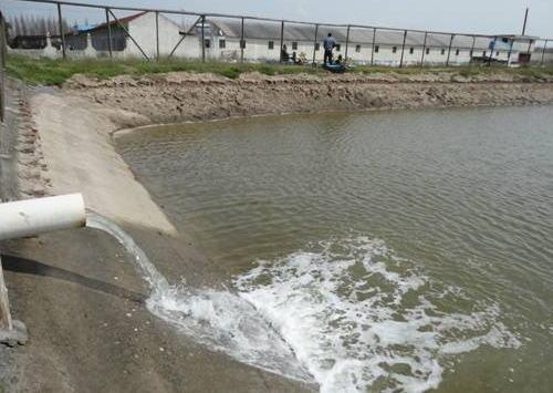 秋季养鱼池塘水质调控的几点建议