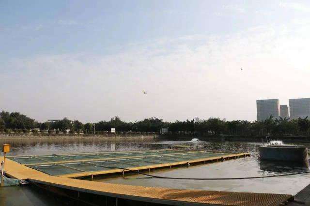 通威池塘循环水PRAS模式现,万千英雄来相见_养鱼技巧,蓝藻预防