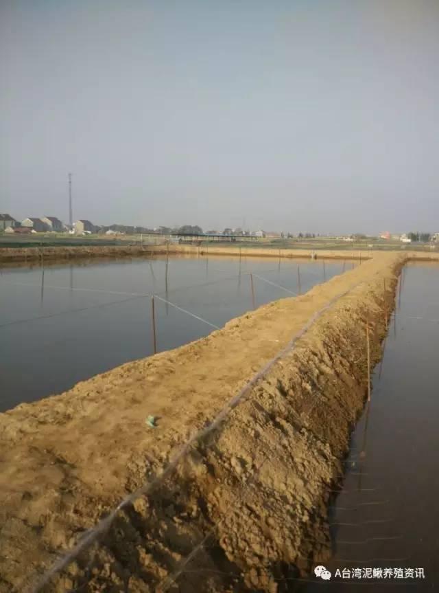 鱼塘进排水设计安装-台湾泥鳅养殖池塘的建设要点