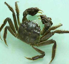 小龙虾几月份出来_3月份的小龙虾为什么那么黑_几月份的小龙虾最肥