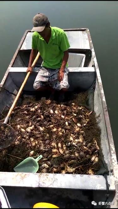 如何提高大闸蟹脱壳翻倍_河蟹一亩地放多少蟹苗_五周hcg不翻倍