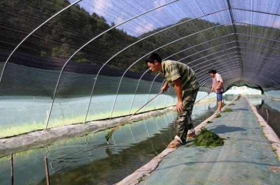 牛蛙养殖技术视频大全_牛蛙蝌蚪养殖技术_牛蛙养殖技术交流群