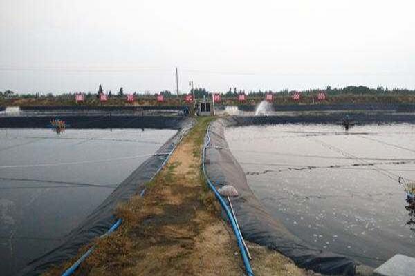 解读:矿物元素在中茬虾养殖的稳水和促长中能起到独特的作用,这图片