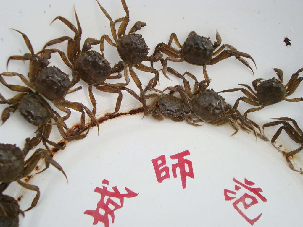 淡水螃蟹图片大全供应] 海底螃蟹图片大全