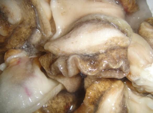 [供方]冻鲜海螺肉图片
