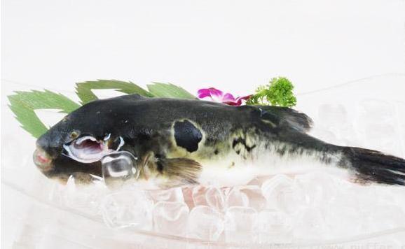 河豚鱼及冻品_其他价格_中国水产养殖网