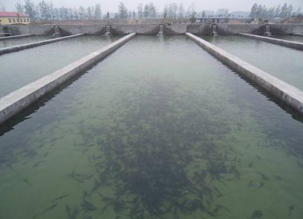 [供方]有海参养殖池和育苗室合作