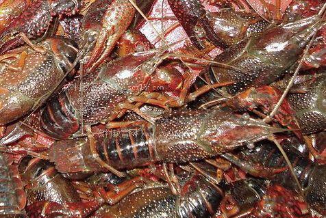 虾塘生物消毒剂价格_淡水小龙虾价格_中国水产养殖网
