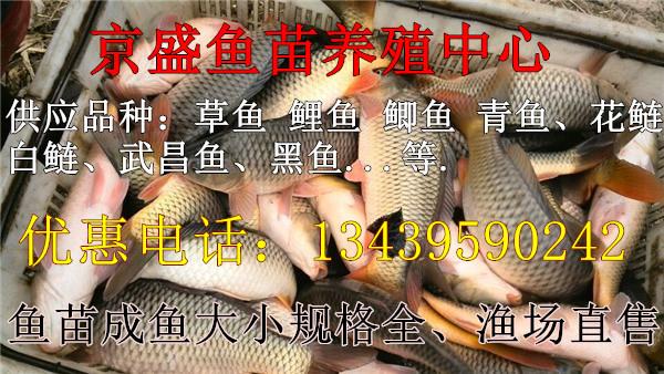 渔场批发垂钓草鱼鲤鱼鲫鱼青鱼等淡水鱼