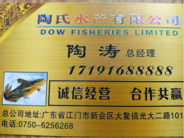 陶氏水产公司销售黄颡鱼苗、回收商品鱼,联系人陶涛17191688888微信同步