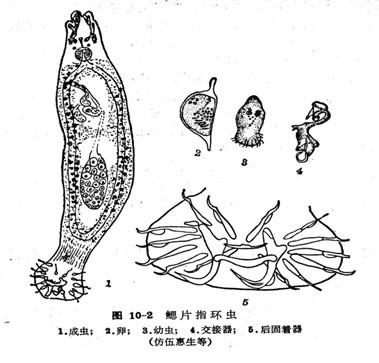 鱼鳃的结构图; 淡水鱼鱼病图谱;