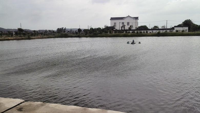 江苏省常州市九月份开始供应活鳜鱼,水车可以直达塘口.