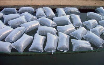 太白渔场黄颡鱼人工繁殖取得重大突破