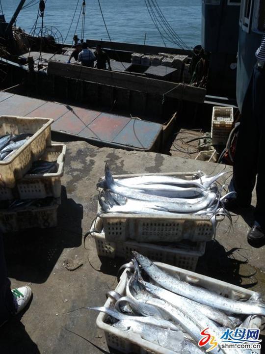 高成本催高鱼价&nbsp   昨天上午,记者驱车赶往牟平养马岛中心渔港.