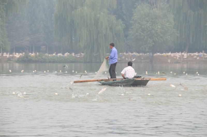 山东省海洋与渔业厅在济南组织美里湖捕鱼节活动