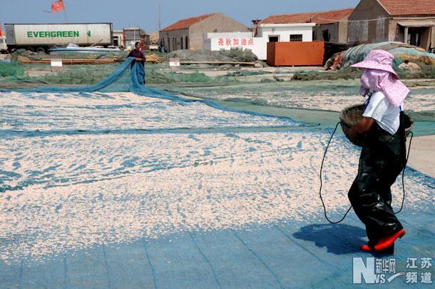 6月24日,连云港连岛渔村的渔民在渔港码头将水煮好的鲜虾皮进行晾晒.