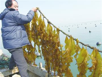 山东青岛崂山区5年8处人工鱼礁开垦海洋牧场