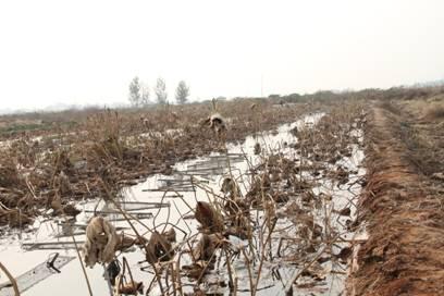 局领导调研青县泥鳅甲鱼等特种水产品养殖