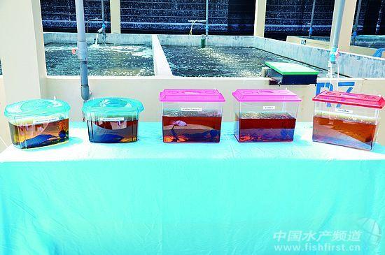 新匍京娱乐场官方下载 9