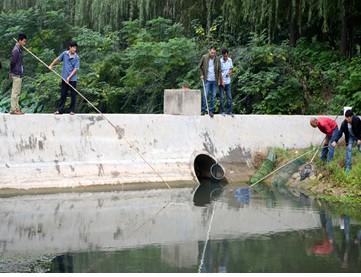 河南许昌市东城区天宝河现大片死鱼 或有人故意药鱼