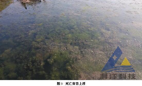 遼寧省大連莊河市栗子房鎮許老板的海參池塘,面積80畝,水深平均1.6米,放養海參共6000斤,規格100頭/斤~500頭/斤,內附著基以網礁和扇貝籠為主,石礁較少。    2013年7月9日,池塘內有許多青苔開始死亡,下水撈青苔,發現有部分青苔開始發熱,青苔下面有黑臭泥(圖1)。這一帶夏眠的海參有異常出礁,身體無收縮力,發軟并伸長(圖2),有些已經出現翻肚現象。當日上午測量水質指標:pH值8.
