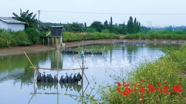 应用实例   1.宇顺公司的26号塘之前是亲鱼培育塘,池塘水体很肥,鲮鱼和白鲢浮头严重,需要24小时不间断地增氧。安装灵捷微电水处理系统一个月以后,该塘水质得到明显的改善,水体透明度达10cm以上,白天不用开增氧机,鱼浮头的现象也基本没有出现过。在一个月后该塘亲鱼产卵和孵化的回塘死亡率都是最低的。   2.2号和5号塘为苗种培育塘。在未安装灵捷微电水处理系统之前,苗种死亡率很高,特别是鱼苗开眼时,有时候会出现整塘鱼苗全部死亡的情况。在高密度育苗条件下,通过在进出水口安装灵捷微电处理系统,并增加水车式增