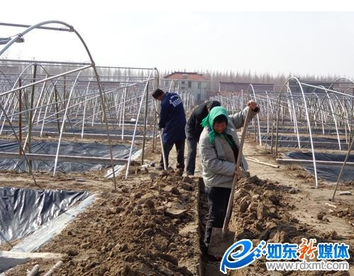 江苏南通如东:流转1800亩土地养殖南美白对虾