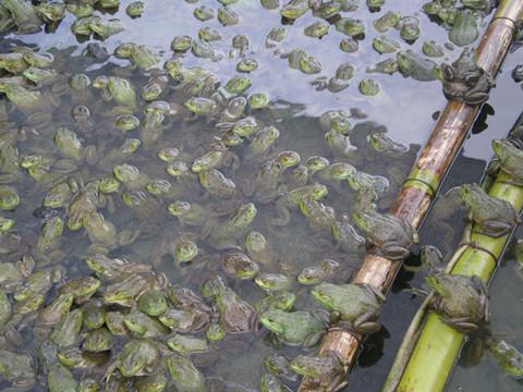 发展特色水产养殖业_合肥发展特色水产养殖淡水里也能养出海鲜_
