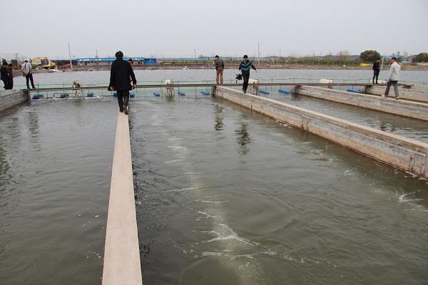 池塘循环水对虾养殖模式的技术特点及发展趋势图片